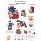 Il cuore umano, Anatomia e fisiologia, 4006926 [VR4334UU], Heart Health and Fitness Education