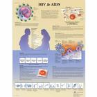 HIV and AIDS Chart,VR5725L