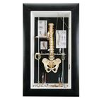 "Medium wall display ""Spine"",W23003"