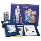 Circulatory System Model Activity Set, 1005475 [W40206], Human Heart Models