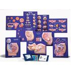 9 Model Activity Sets of the Human Reproductive System,W40211