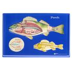 Perch Model Activity Set,W40235