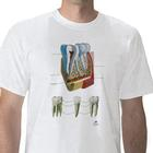 Anatomical T-Shirt Tooth, L,W41030