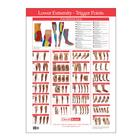 W41172LE: Trigger Point Chart Lower Extremity