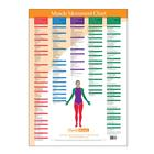 W41172MM: Trigger Point Chart Muscle Movement