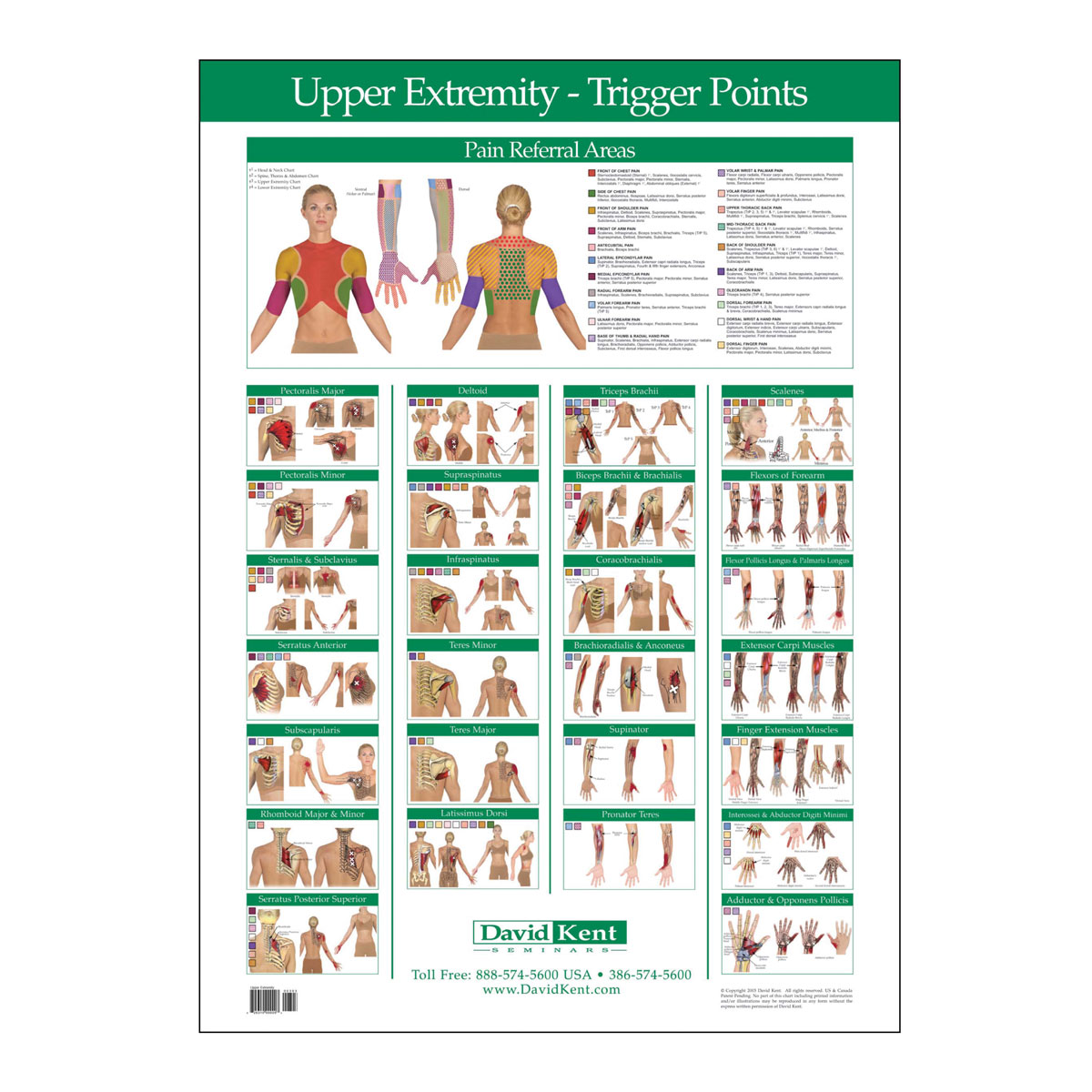 Trigger Point Chart Upper Extremity Therapy Charts