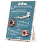 W43083: Asthma Easel Display