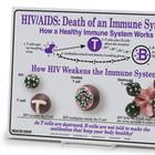 HIV/AIDS: Death of an Immune System Easel Display, 3004664 [W43116], Sex Education