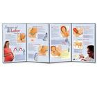 Stages of Labor Folding Display, 3004698 [W43155], Pregnancy and Childbirth Education