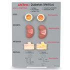 Diabetes Mellitus Teaching Kit, 1020039 [W44766], Diabetic Teaching Tools
