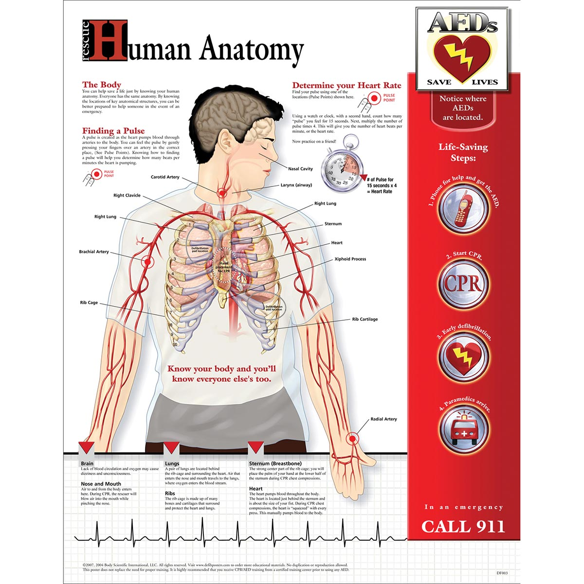 Human Anatomy Chart Laminated Df003l Bls And Cpr Accessories