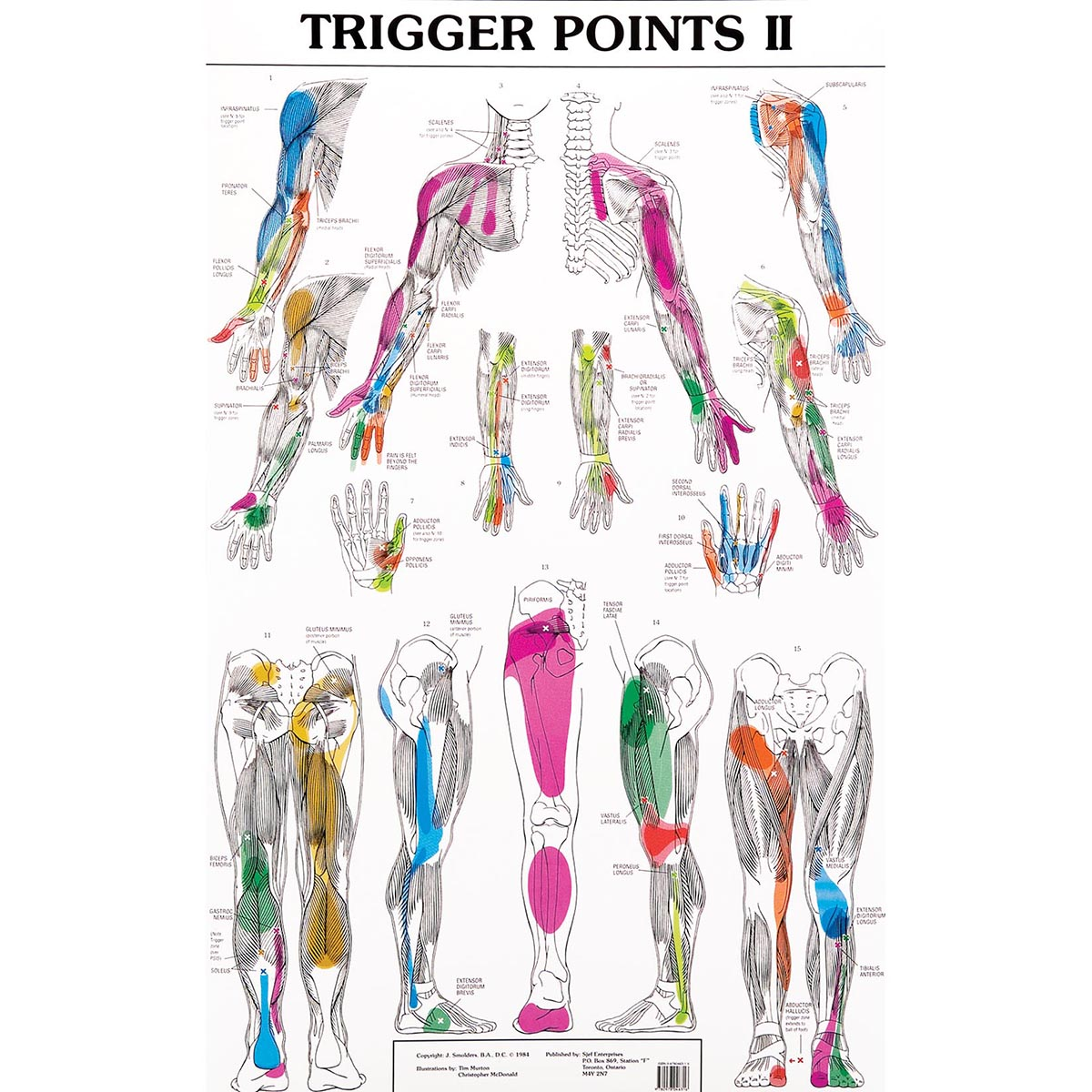 Set of trigger point charts w99990 acupuncture 3b scientific
